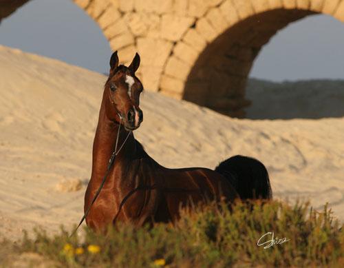 صور خيل جميلة al-maraam-april-07.j